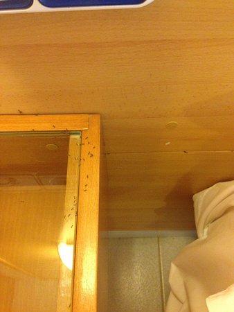 Hotel les illes estartit Hormigas habitación